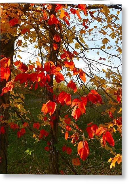 Julie Dant Greeting Cards - The Reds of Autumn Greeting Card by Julie Dant