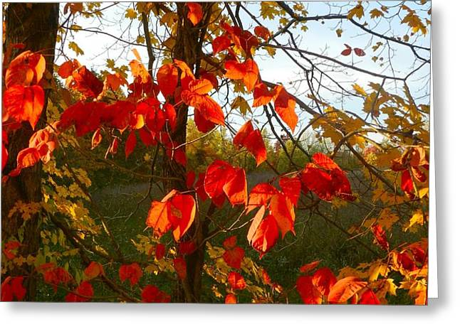 The Reds of Autumn Greeting Card by Julie Dant