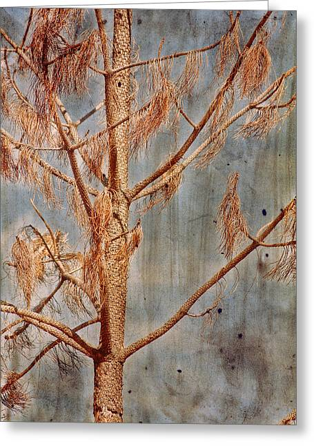 Pine Needles Greeting Cards - The Reminder Greeting Card by Bonnie Bruno