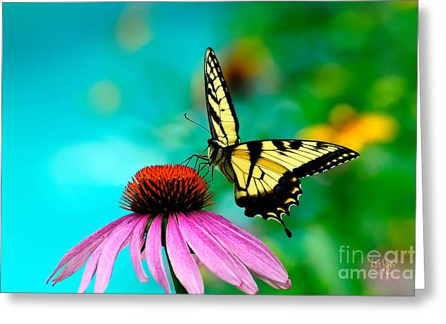 Swallow Tail Greeting Cards - The Return Greeting Card by Lois Bryan