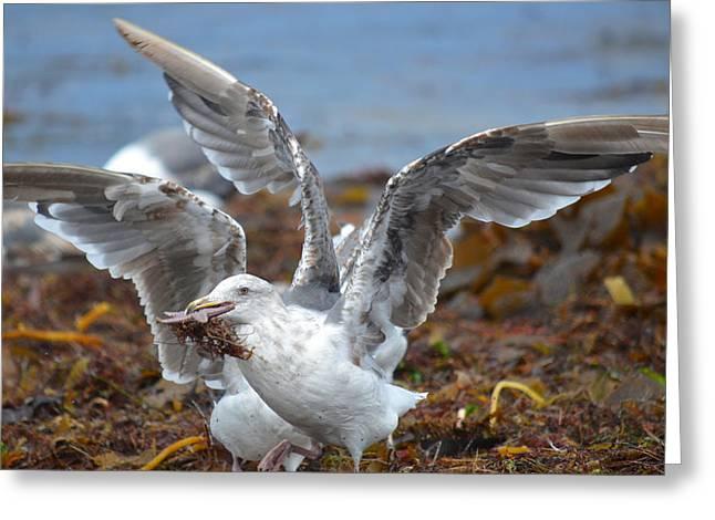 Seagull With Starfish Greeting Cards - The Reward Greeting Card by Fraida Gutovich