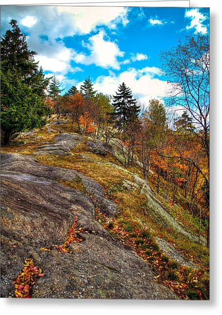 Fir Trees Greeting Cards - The Rocks Above Eagle Bay Greeting Card by David Patterson