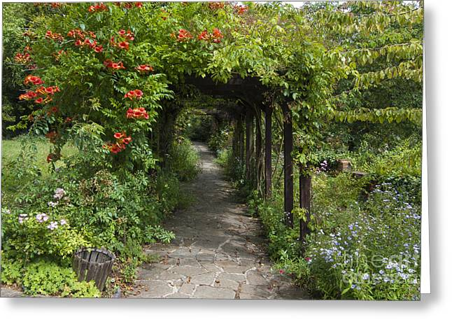 Arbour Greeting Cards - The Rookery Greeting Card by Donald Davis