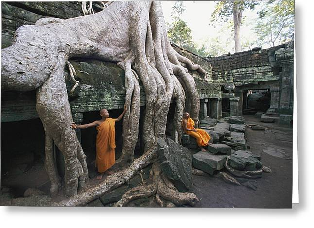 Wat Angkor Greeting Cards - The Roots Of A Strangler Fig Creep Greeting Card by Paul Chesley