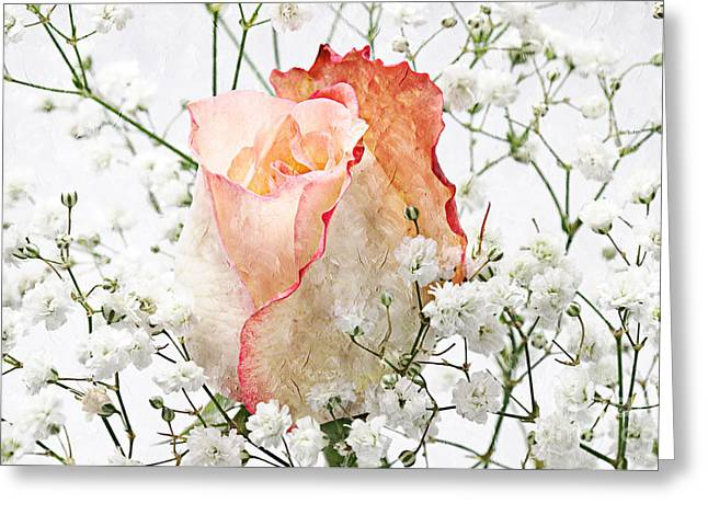 Single Mixed Media Greeting Cards - The Rose Greeting Card by Andee Design