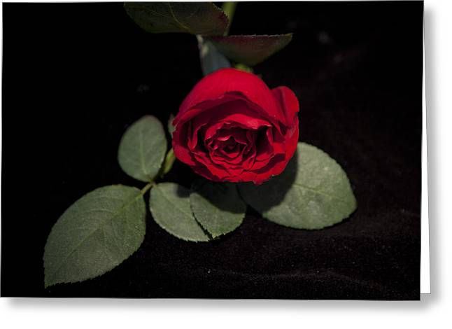 The Rose Greeting Card by Charles Warren