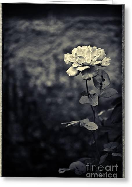 Split Toning Greeting Cards - The rose Greeting Card by Silvia Ganora