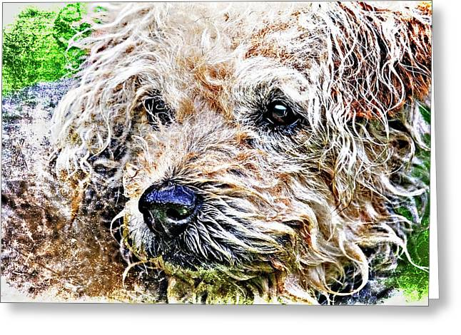 Puppy Dog Eyes Greeting Cards - The Scruffiest Dog In The World Greeting Card by Meirion Matthias