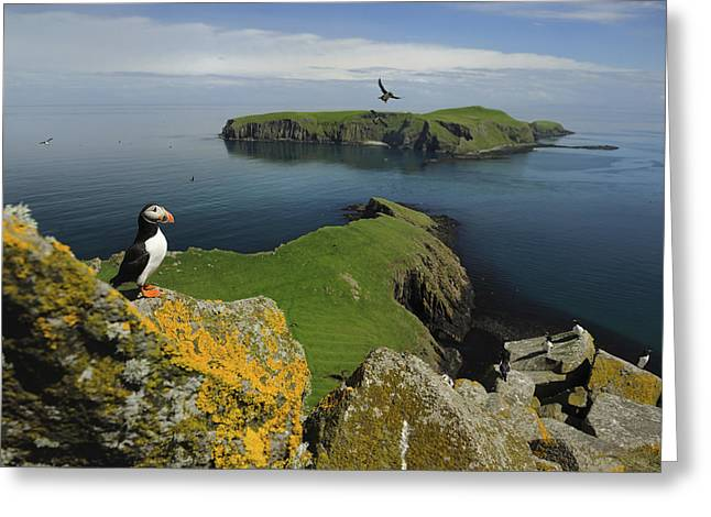 Flying Animal Greeting Cards - The Shaint Islands Are Breeding Grounds Greeting Card by Jim Richardson