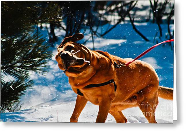 Slobber Greeting Cards - The Shake Greeting Card by Mitch Shindelbower