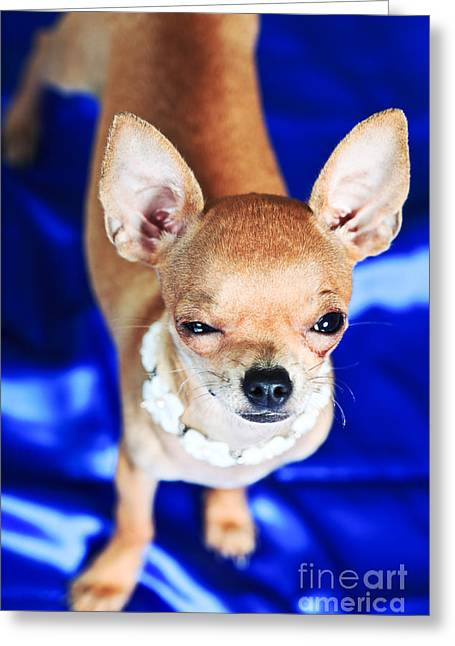 The Smallest Breed Of Dog Greeting Card by MotHaiBaPhoto Prints