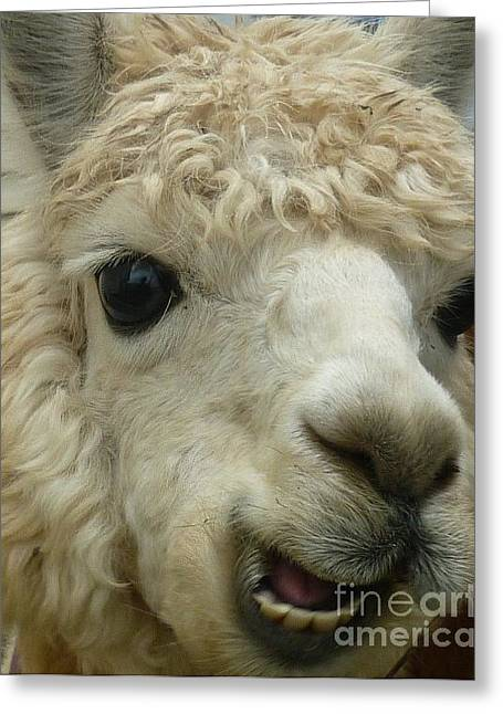 Farm Greeting Cards - The Smiling Alpaca Greeting Card by Therese Alcorn
