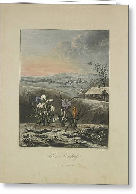 The Snowdrop Greeting Card by Robert John Thornton