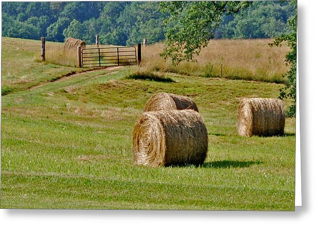 Fence Pastels Greeting Cards - The south Greeting Card by Steavon Horne