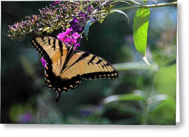High Resolution Prints Greeting Cards - The Splendor of Nature Greeting Card by Gerlinde Keating - Keating Associates Inc