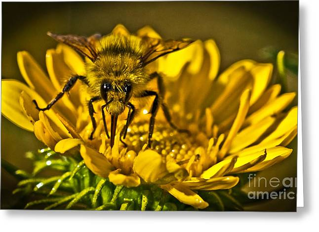 Stinger Greeting Cards - The Stand Off Greeting Card by Robert Bales