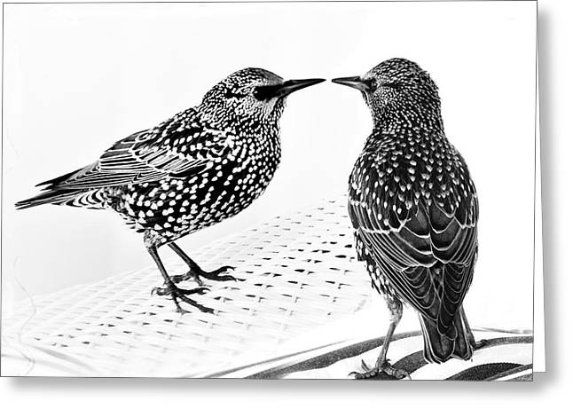 Black_white Photography Greeting Cards - The Standoff Greeting Card by Gerlinde Keating - Keating Associates Inc