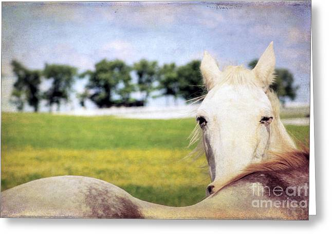 The Stare Greeting Card by Darren Fisher