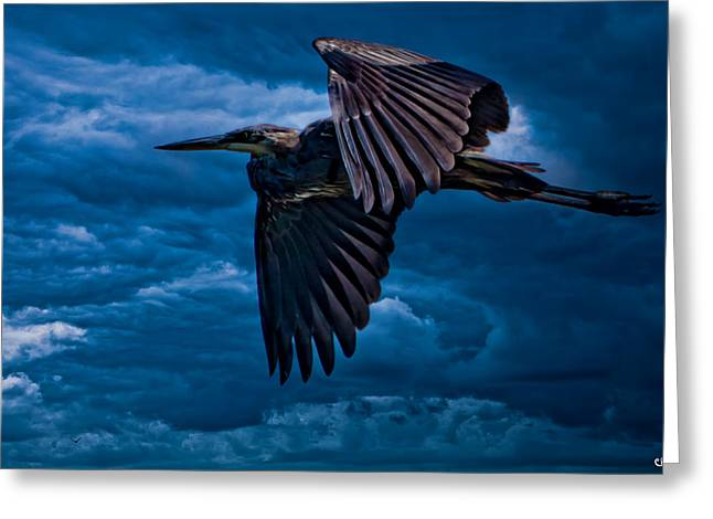 Gray Heron Greeting Cards - The Stormbringer Greeting Card by Chris Lord