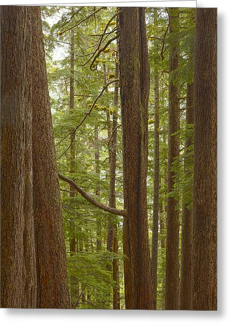 Southeast Alaska Greeting Cards - The Stray Branch Greeting Card by Tim Grams