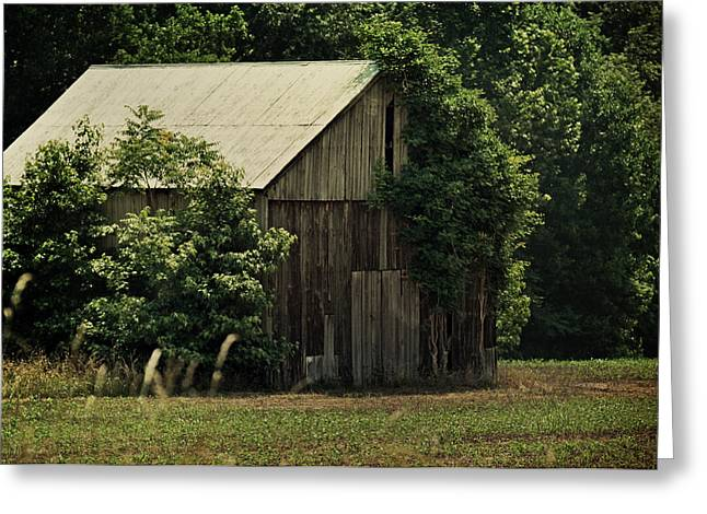 Old Barns Greeting Cards - The Summer Barn Greeting Card by Rebecca Sherman