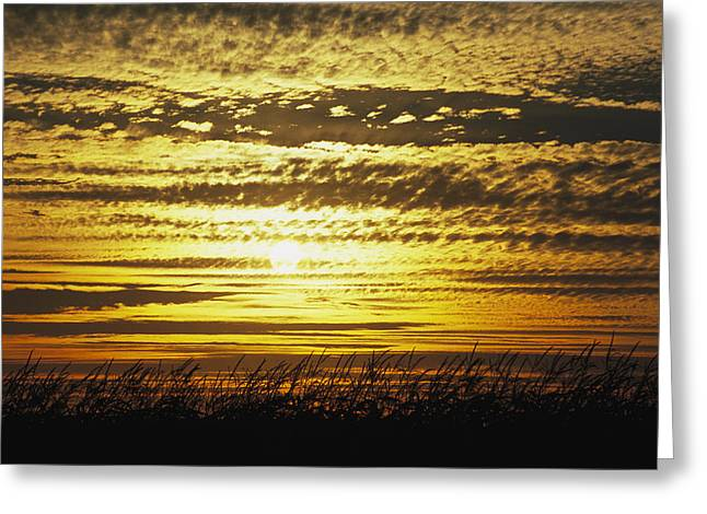 Cornfield Greeting Cards - The Sun Sets Over A Cornfield Greeting Card by Paul Damien