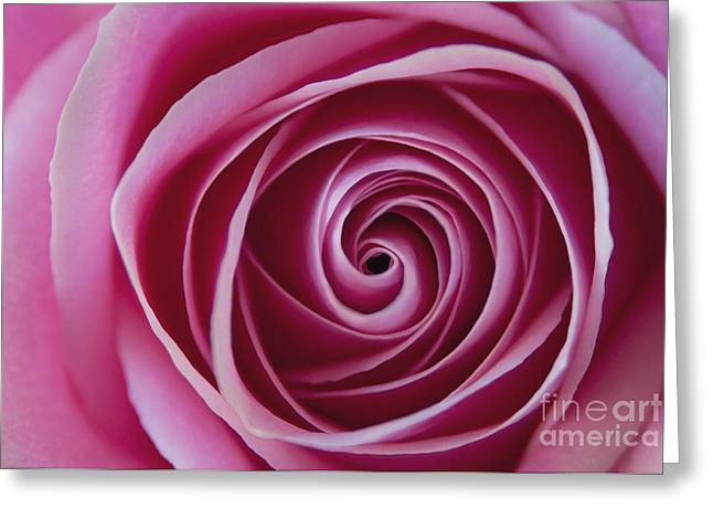 Roses Greeting Cards - The Swirl Greeting Card by Dan Holm