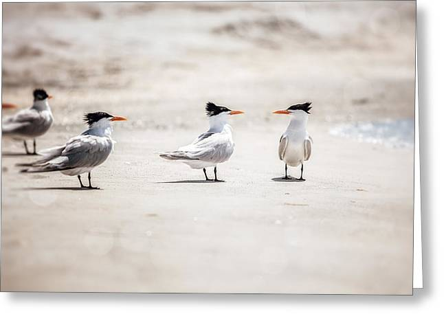 Tern Photographs Greeting Cards - The Talking Terns Greeting Card by Lisa Russo
