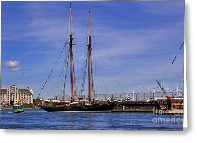 Tall Ships Greeting Cards - The tall ship Pacific Grace based in Victoria Canada Greeting Card by Louise Heusinkveld