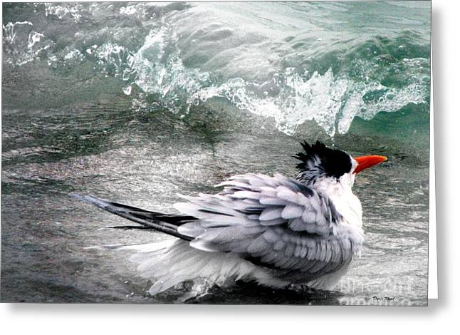 Tern Digital Art Greeting Cards - The Tern Greeting Card by Doris Wood