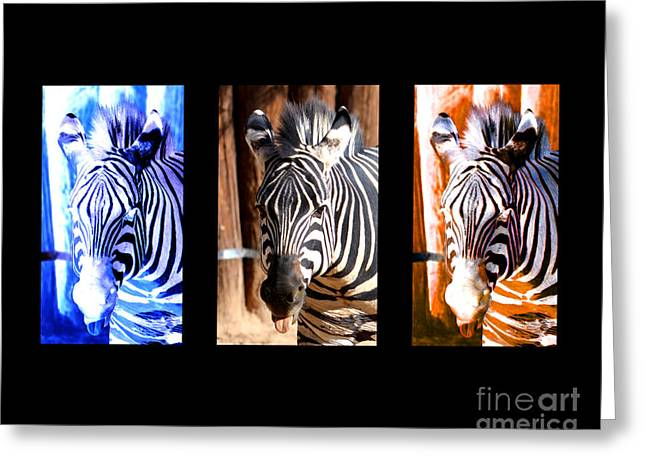 Decor Photography Greeting Cards - The Three Zebras black borders Greeting Card by Rebecca Margraf