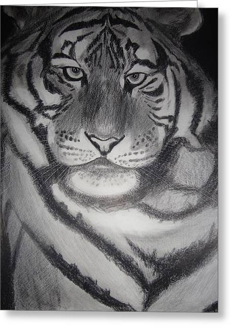 The Tiger Drawings Greeting Cards - The Tiger Greeting Card by Subodha Nayak