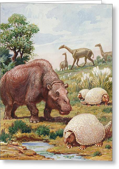 National Geographic Society Art Greeting Cards - The Toxodon, Glyptodon Greeting Card by Charles R. Knight