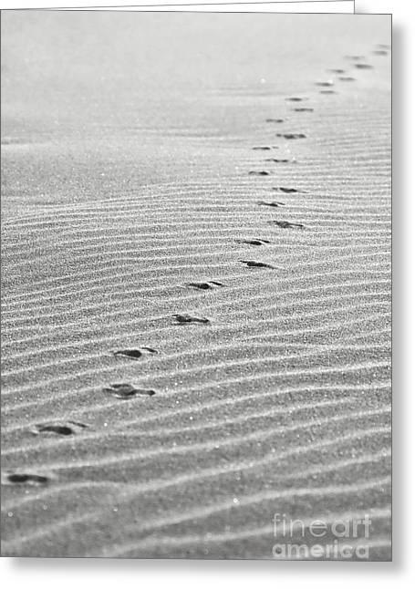 Seagul Greeting Cards - The Trail Greeting Card by Gabriela Insuratelu
