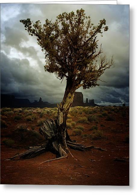 Gnarly Digital Greeting Cards - The Tree Greeting Card by Ellen Heaverlo