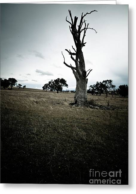 Ecology Greeting Cards - The Tree Greeting Card by John Buxton