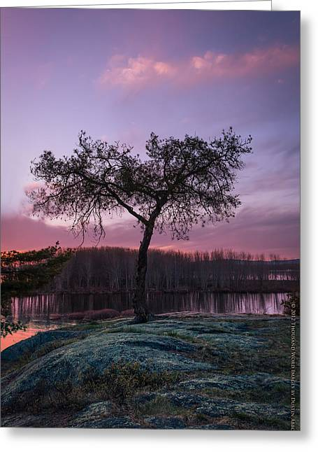 Photoshop Cs5 Greeting Cards - The Tree of Life Greeting Card by Dustin Abbott