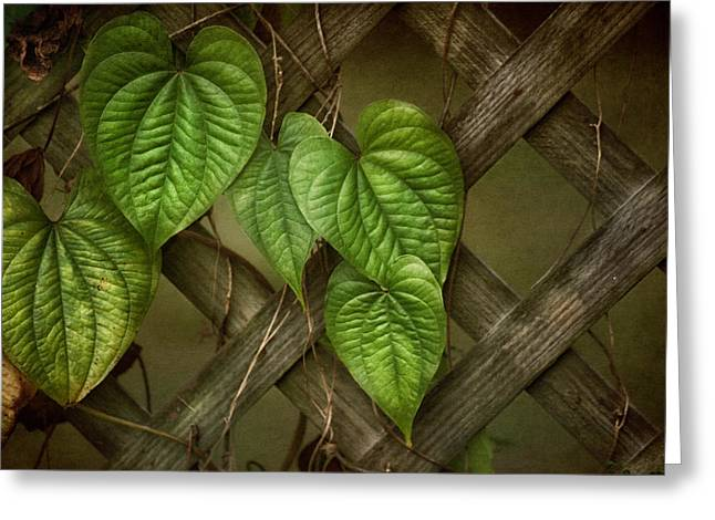 Brenda Bryant Greeting Cards - The Trellis Greeting Card by Brenda Bryant