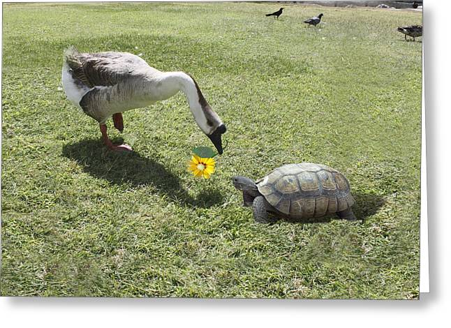 Bff Greeting Cards - The Turtle and The Goose Greeting Card by Gravityx Designs