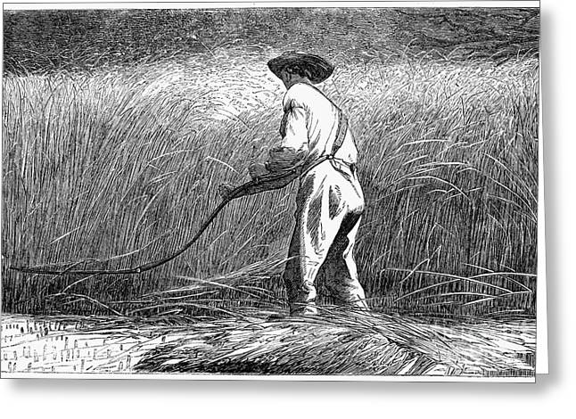 Winslow Homer Photographs Greeting Cards - The Veteran In A New Field Greeting Card by Granger
