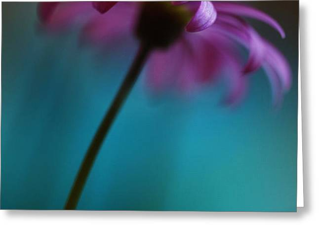 The View Above Greeting Card by Kym Clarke