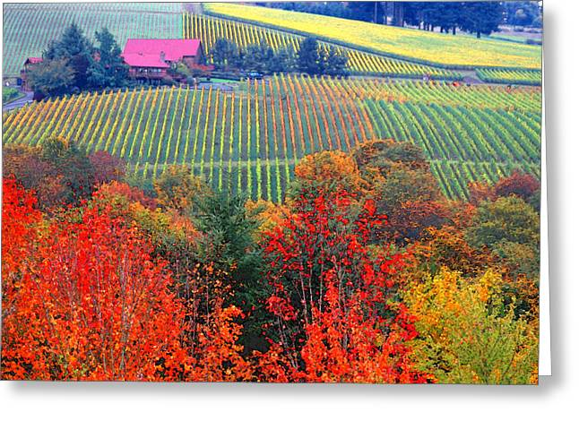 Wine Tasting Greeting Cards - The view from Red Ridge Greeting Card by Margaret Hood