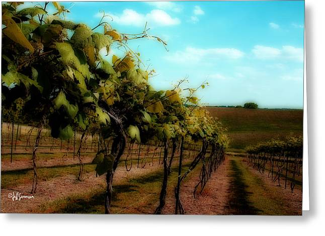 Silver Hills Winery Greeting Cards - The Vineyard Greeting Card by Jeff Swanson