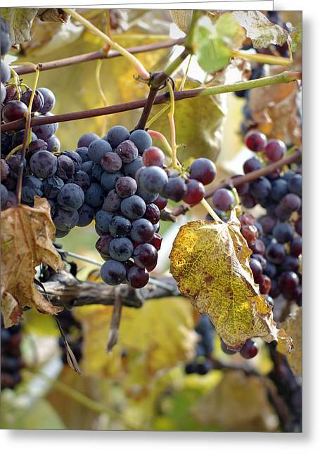 The Vineyard Greeting Card by Linda Mishler