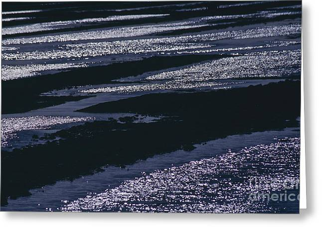 Wadden Sea Greeting Cards - The Wadden Sea Greeting Card by Heiko Koehrer-Wagner