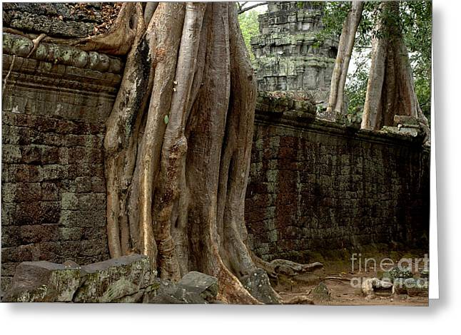 Ta Prohm Greeting Cards - The Wall At Ta Prohm Greeting Card by Bob Christopher