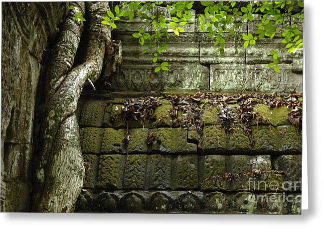 Traveling In Cambodia Greeting Cards - The Wall Ta Prohm 2 Greeting Card by Bob Christopher