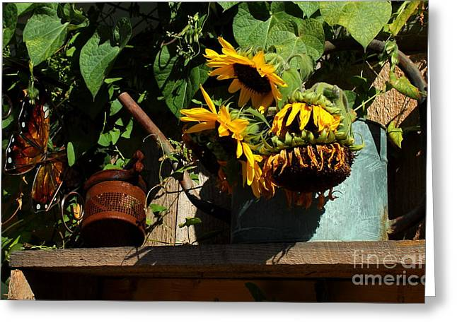 Yellow Sunflower Greeting Cards - The Watering Can Greeting Card by Marjorie Imbeau
