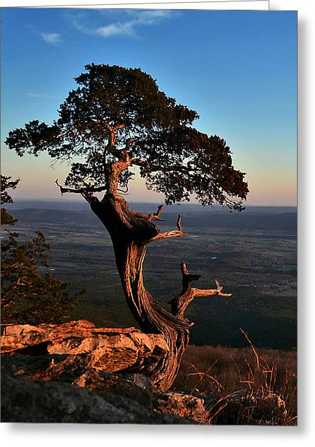 Jeka World Photography Greeting Cards - The Weathered Watcher Greeting Card by Jeff Rose