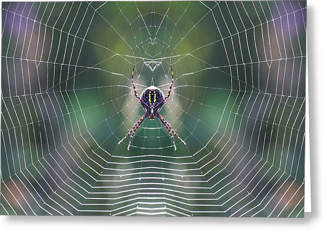 Symetrical Greeting Cards - The web maker Greeting Card by Mircea Costina Photography